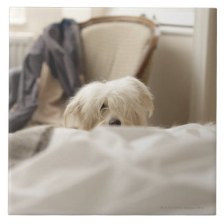 White dog hiding behind bed (differential focus) ceramic tile