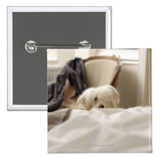 White dog hiding behind bed (differential focus) pinback button