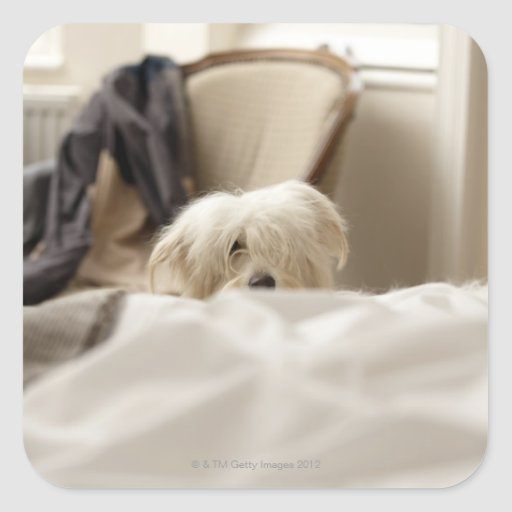 White dog hiding behind bed (differential focus) stickers