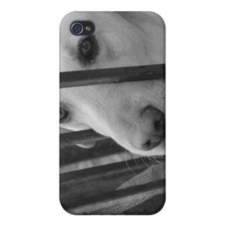 White Dog iPhone template iPhone 4 Cases