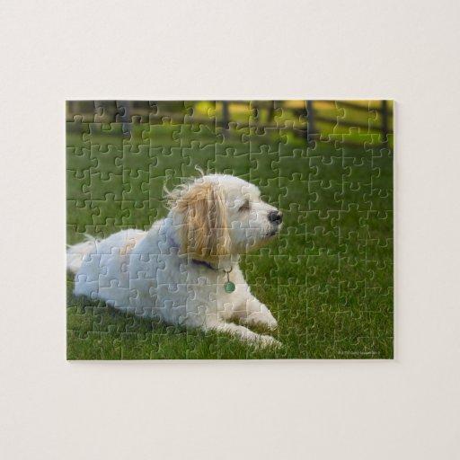 White dog jigsaw puzzles