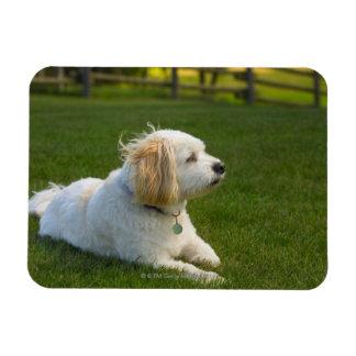 White dog magnet