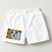 White dog painting boxers