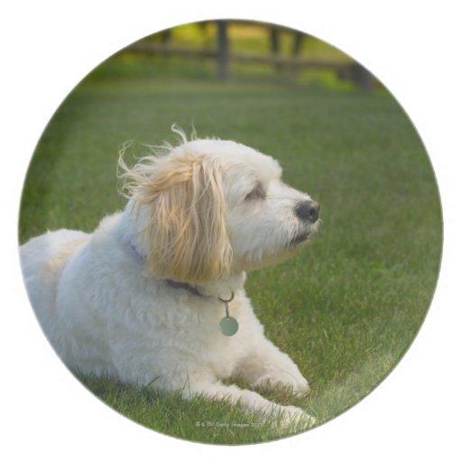 White dog party plates