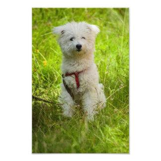 White dog photo print