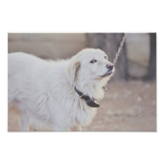 White dog photo art