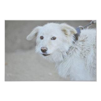 White dog photographic print