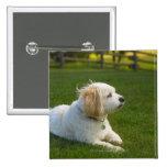 White dog pinback button