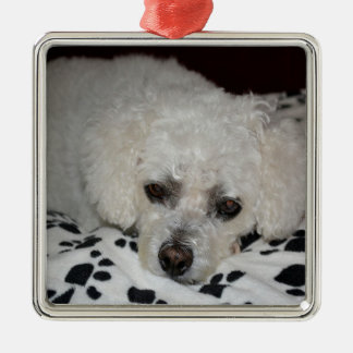 White Dog Premium Square Ornament