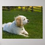 White dog print