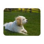 White dog rectangular magnets