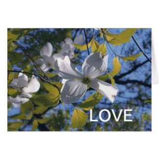 White Dogwood Blossom LOVE Greeting Card