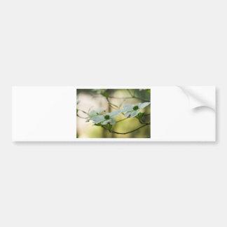White Dogwood Blossoms - Cornus florida Bumper Sticker