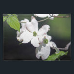 "White Dogwood Blossoms Placemat<br><div class=""desc"">The Dogwood,  (Cornus florida) is a species of flowering plant native to eastern North America and northern Mexico. The tree is commonly planted residential and public areas because of its showy blooms.</div>"