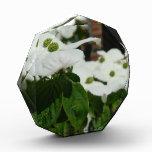 White Dogwood Flower Acrylic Award