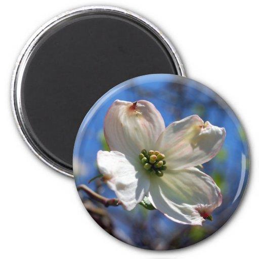 White Dogwood Flower magnet