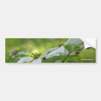White Dogwood Flower Photo Bumper Sticker