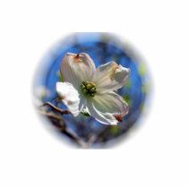 White Dogwood Flower pin Cutout