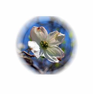 White Dogwood Flower pin Photo Sculpture Button