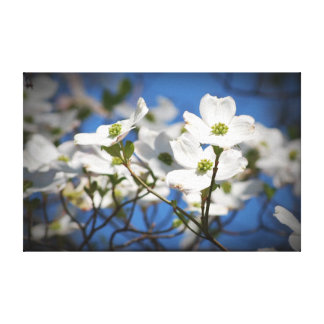 White Dogwood Flowers Canvas Print