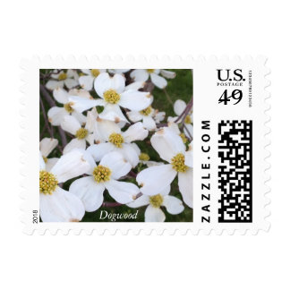 White Dogwood Flowers Picture Photo Postage Stamps