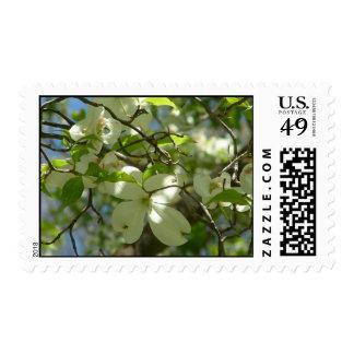 White Dogwood Postage