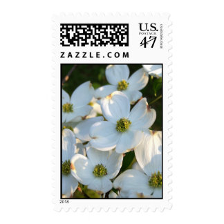 White Dogwood (Raw) Postage