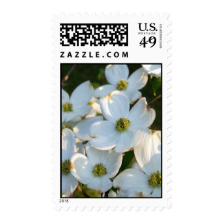 White Dogwood (Raw) Postage Stamps