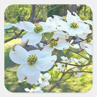 White Dogwood Tree Flowers  Sticker