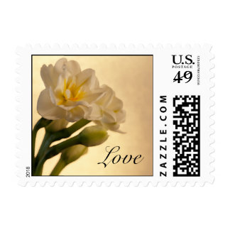 White Double Daffodils Love Wedding Postage Stamp