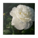 White Double Peonies Tiles or Trivets