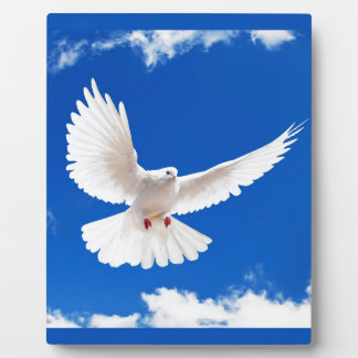 White Dove Bird Peace Love Flying Sky Photo Plaque