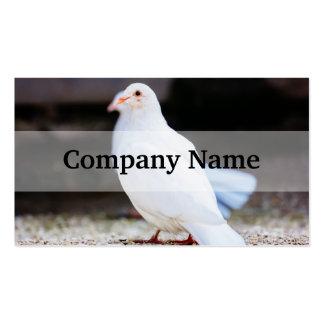 White Dove, Bird Photograph Double-Sided Standard Business Cards (Pack Of 100)