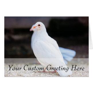White Dove, Bird Photograph Card