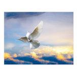 White dove in flight postcards