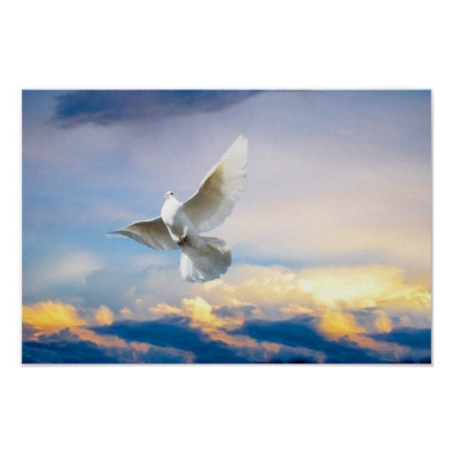 White dove in flight poster