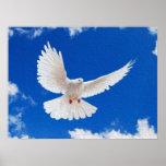 White Dove in Flight Print