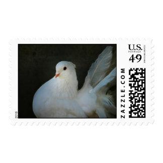 White dove peace symbol postage