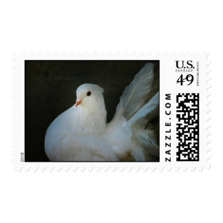 White dove peace symbol stamp