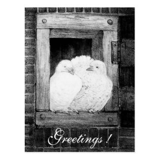 WHITE DOVES AT THE WINDOW  black and white Postcard