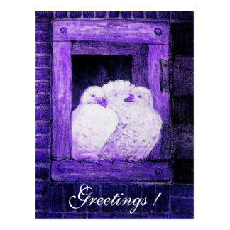 WHITE DOVES AT THE WINDOW blue purple Postcard