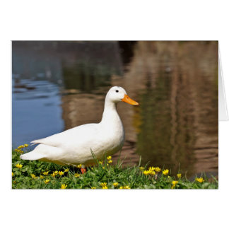 white duck001 greeting cards