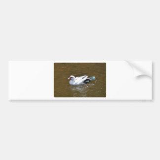 White Duck. Bumper Sticker
