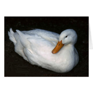 White Duck Greeting Card