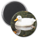 White Duck Magnet