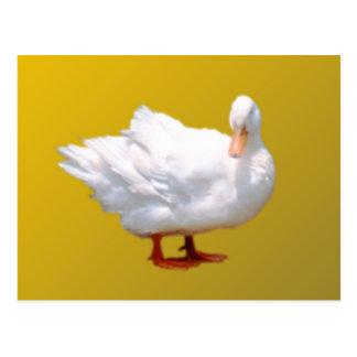 White Duck Postcard