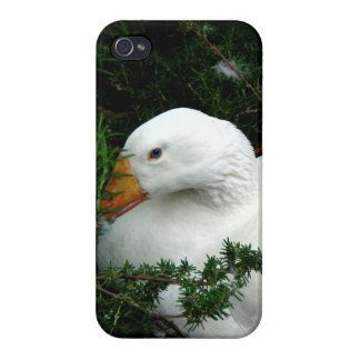 WHITE DUCK RESTING iPhone 4/4S COVER