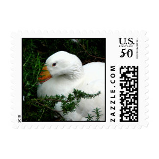 WHITE DUCK RESTING POSTAGE