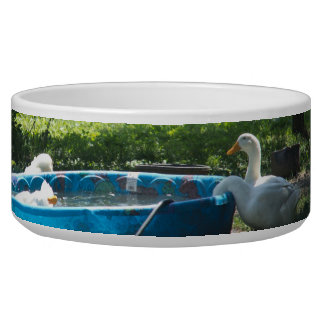 White Ducks and a Pool Pet Bowl