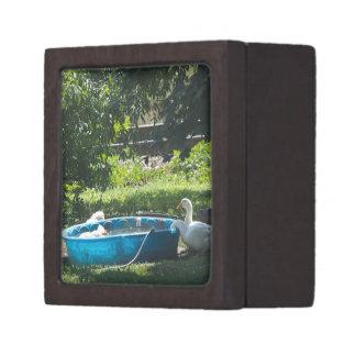 White Ducks and a Pool Premium Gift Box